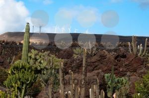 Jardin De Cactus, Lanzarote - franky242 photography