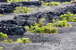 Lanzarote Vineyards - franky242 photography