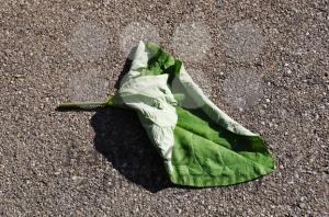 Leaf-on-the-street