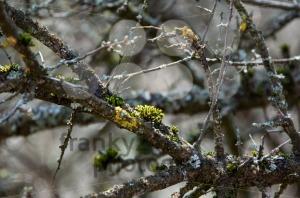 Lichen Branch - franky242 photography