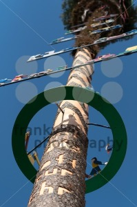 May pole - franky242 photography