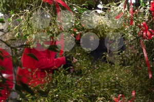 Mistletoe-stand-on-Christmas-market