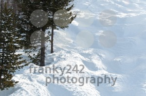 Mogul-slope-with-trees