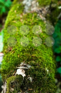 Moss On Tree - franky242 photography