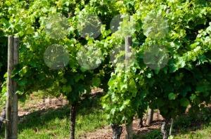 New-Wine1