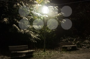 Nightly-park-scene