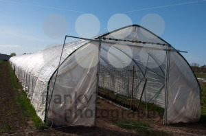 Nursery Greenhouse - franky242 photography