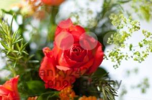 Orange Bouquet - franky242 photography