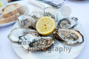 Oysters on a plate - franky242 photography
