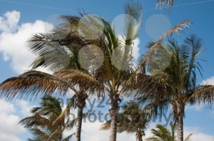 Palm trees - franky242 photography