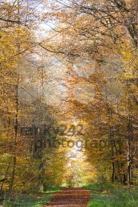 Pathway through the autumn forest - franky242 photography