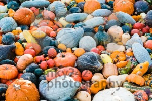 Pumpkin selection - franky242 photography