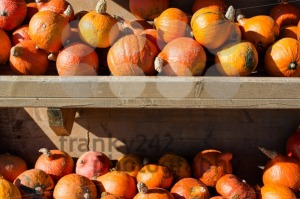 Pumpkins for sale - franky242 photography