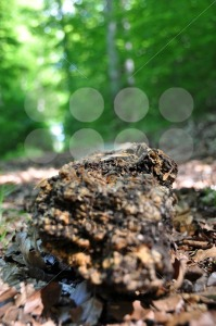 Rotten-tree-trunk-2