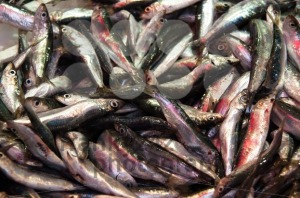Sardines for sale - franky242 photography