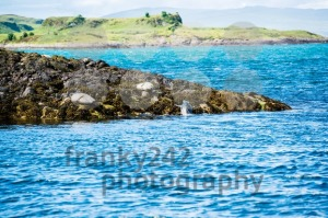 Sea Lions or Seals - franky242 photography