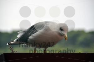 Seagull-in-flower-pot