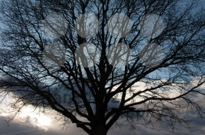 Silhouette of tree on winter sunset sky - franky242 photography