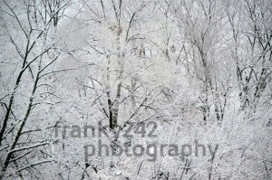 Snow covered trees - franky242 photography