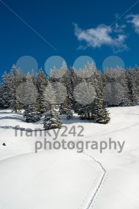 Snowshoe traces - franky242 photography