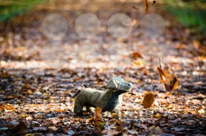 Soft toy dog is placed in autumn forest - franky242 photography