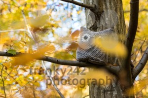 Soft toy owl is placed in autumn forest - franky242 photography