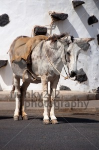 Spanish Donkey - franky242 photography