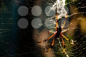 Spider-On-The-Net
