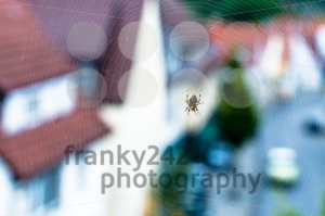 Spider with web - franky242 photography