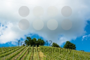Spring-Vineyard-with-great-blue-sky