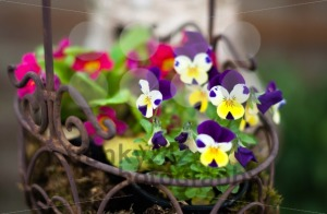 Spring flower basket - franky242 photography