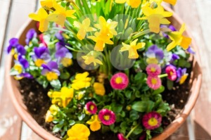Spring plant arrangement in flower pot - franky242 photography