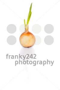 Sprouting onion - franky242 photography