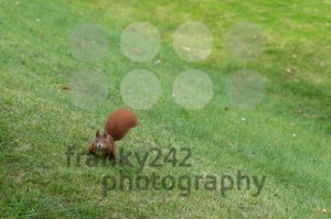 Squirrel eating nuts - franky242 photography