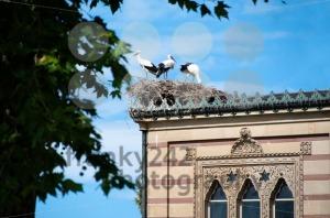 Stork-Family