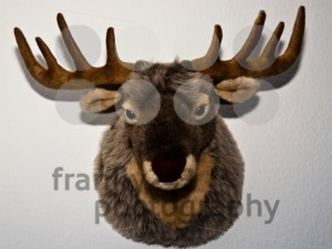 Stuffed-Deer-Mount