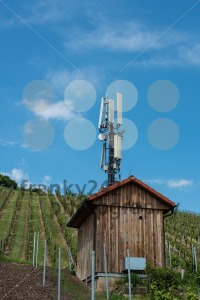 Telecommunication-mast-in-a-vineyard