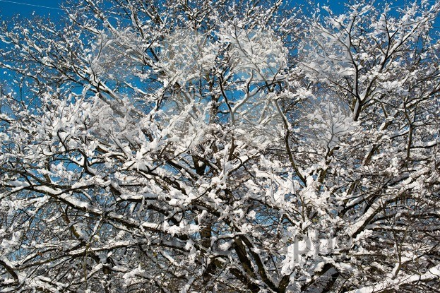 Trees covered with snow - franky242 photography