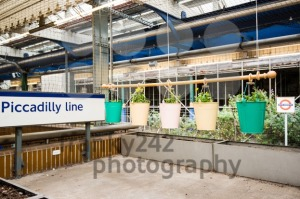Urban Gardening in the London Underground - franky242 photography
