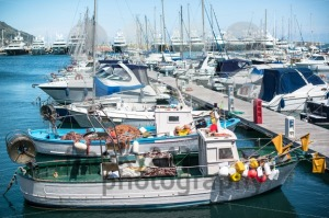 Various-boats-at-rest-in-the-marina
