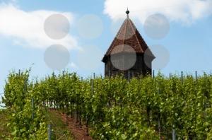Vineyard-with-Melac-Tower-in-Obertürkheim