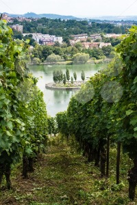 Vineyards-in-Stuttgart4