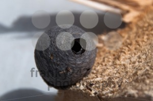 Wasp Nest - franky242 photography