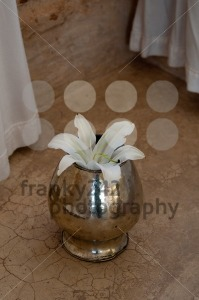 White Lily flower in vase - franky242 photography
