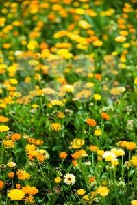 Wild-flowers2