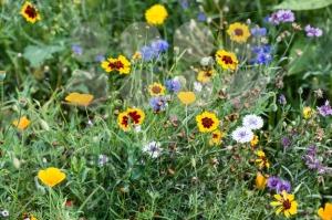 Wild-flowers3