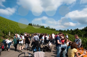 Wine-Tour-in-Obertürkheim-near-Stuttgart-Germany