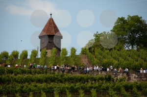 Wine-Tour-in-Obertürkheim-near-Stuttgart-Germany1