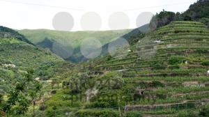 Wine-hills-of-Vernazza-Cinque-Terre