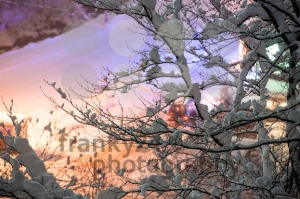 Winter Wonderland - franky242 photography